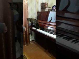 До скольки можно играть на пианино в квартире по закону рф